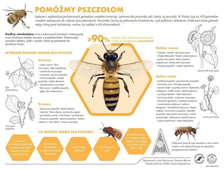 infografika-pszczoly